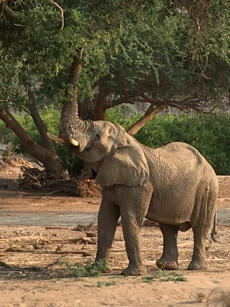 Namibian Elephant on Women's Travel Group Trip